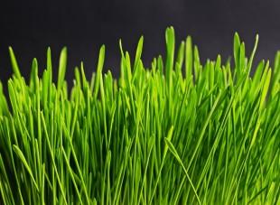 grass-534873_1920